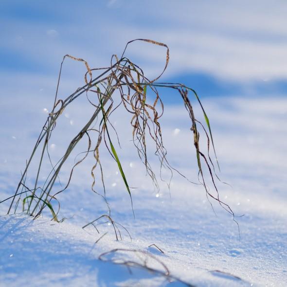 Fotografie Winter